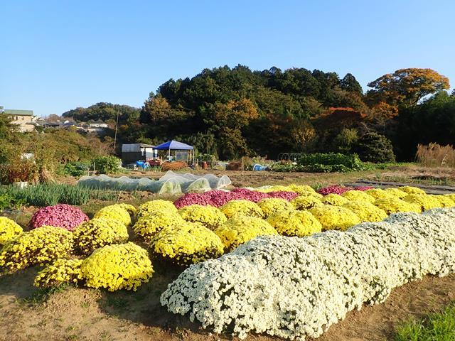 f:id:mochikichi-blog:20210110073628j:plain