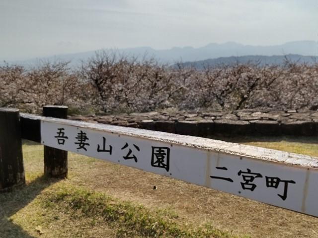 f:id:mochikichi-blog:20210330204839j:plain