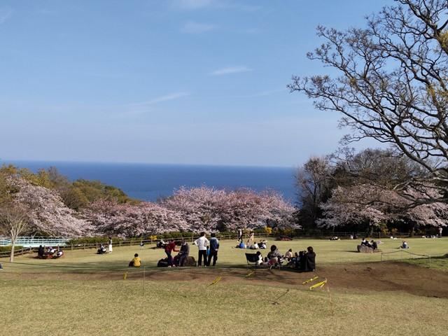 f:id:mochikichi-blog:20210330204849j:plain