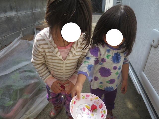f:id:mochikichi-blog:20210517222321j:plain