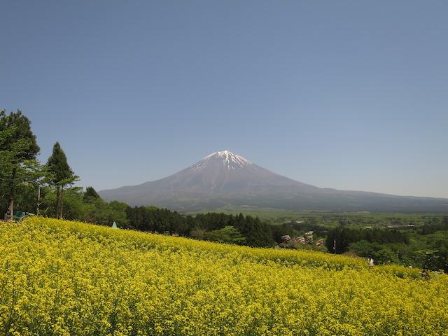 f:id:mochikichi-blog:20210517224007j:plain