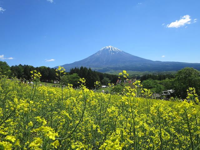 f:id:mochikichi-blog:20210517224937j:plain
