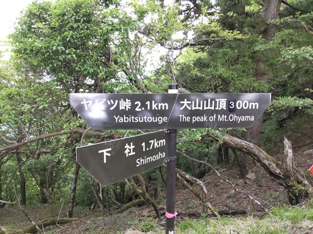 f:id:mochikichi-blog:20210604225029j:plain