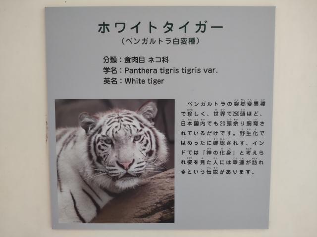 f:id:mochikichi-blog:20210628214337j:plain