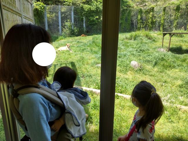 f:id:mochikichi-blog:20210628214435j:plain