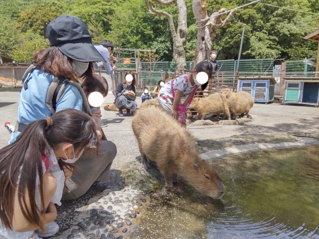 f:id:mochikichi-blog:20210628214512j:plain