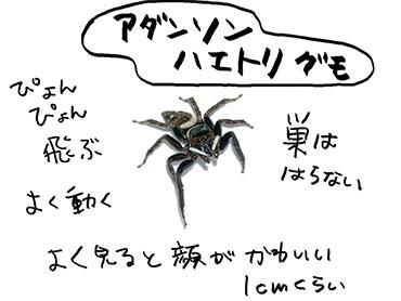 f:id:mochikosan:20170629040321j:plain