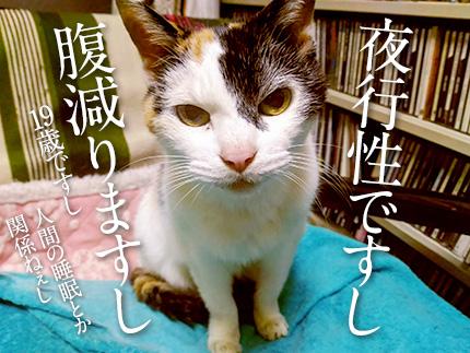 飼い猫19歳