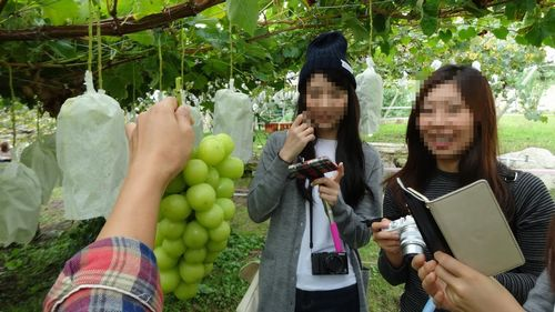 勝沼インター周辺オススメ評判の良いぶどう狩り農園無農薬減農薬大々園口コミ品種が多い珍しい品種の葡萄