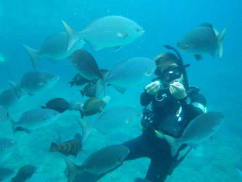 沖縄県那覇市の人気ダイビングショップ潜水どうでしょう口コミ評判