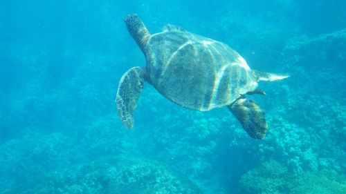 年末年始冬休み沖縄那覇ダイビング貸切で楽しめるマリンスポーツ個人団体予約