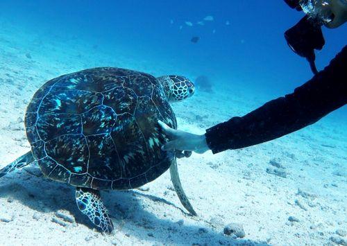 沖縄那覇市夫婦初心者で離島無人島ダイビング体験観光ついでに貸切で楽しめる