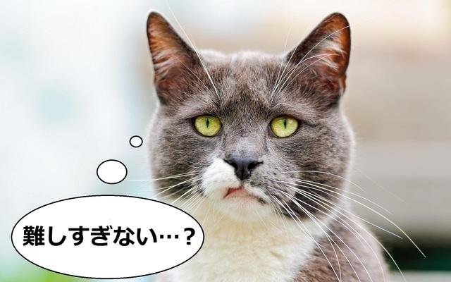 cat-1014209.jpg