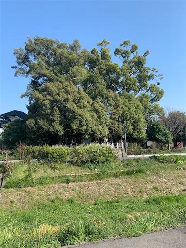 f:id:moesakurai:20200406083203j:image