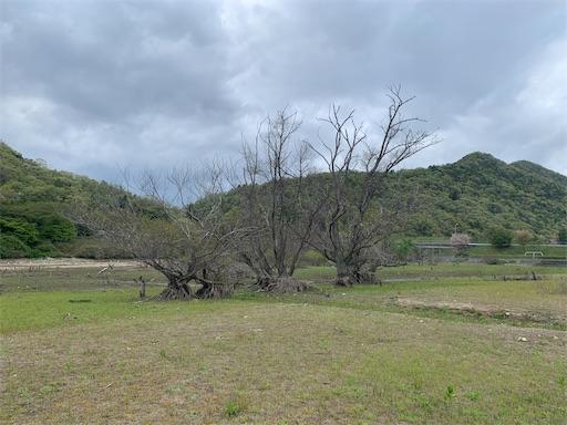 f:id:moesakurai:20210420144201j:image