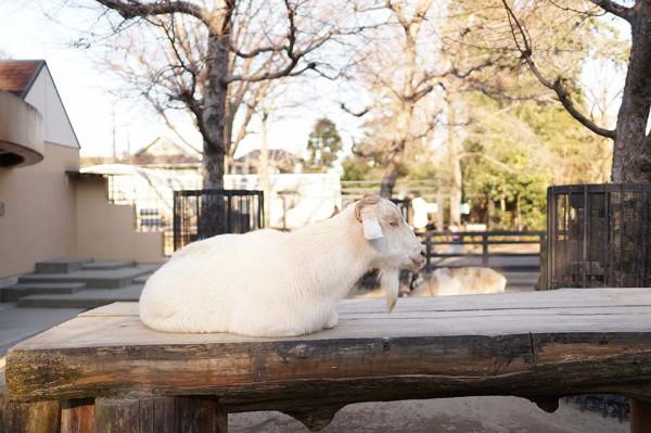 井の頭自然文化園 at吉祥寺