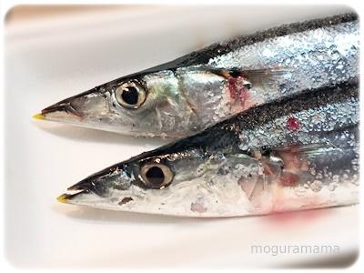 新鮮な秋刀魚
