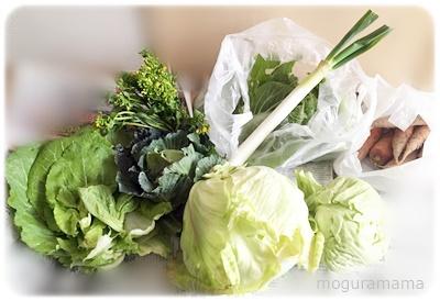 畑で採れた野菜たち