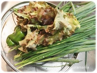 実家の野菜、ニラ、青ねぎ、レタス、ピーマン