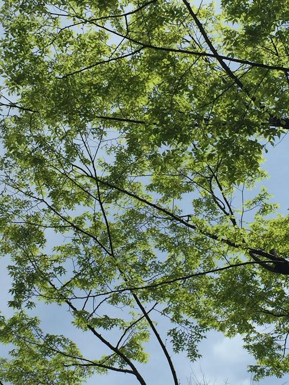 家の近所は自然が多いので、お昼休みに散歩したりできるのが嬉しい(写真)