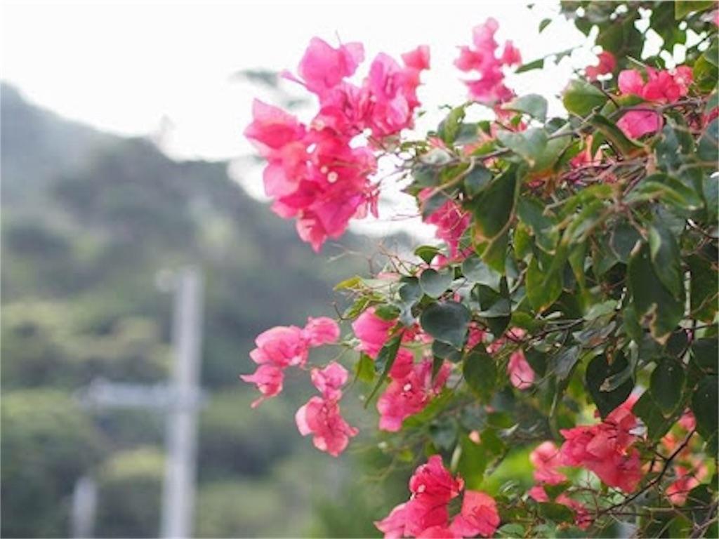 f:id:mojaflower:20170326175437j:image