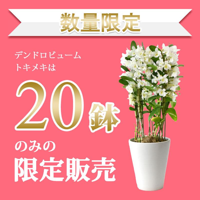 f:id:mojiru:20180411184356j:plain