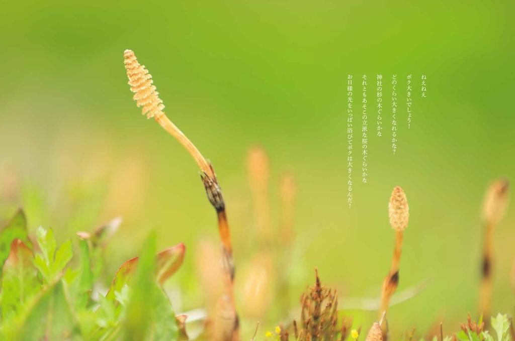 f:id:mojiru:20190118110109j:plain