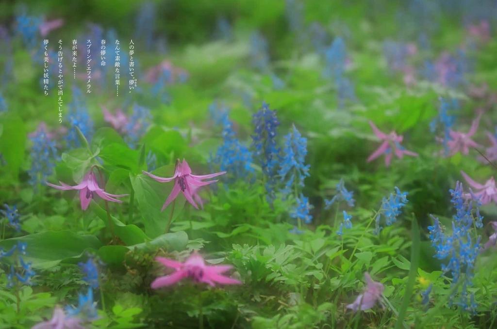 f:id:mojiru:20190118110136j:plain