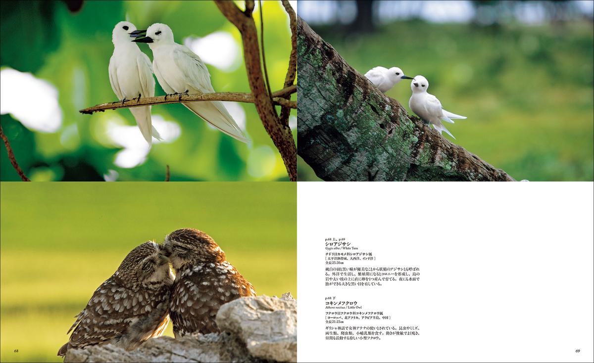 f:id:mojiru:20191029084628j:plain