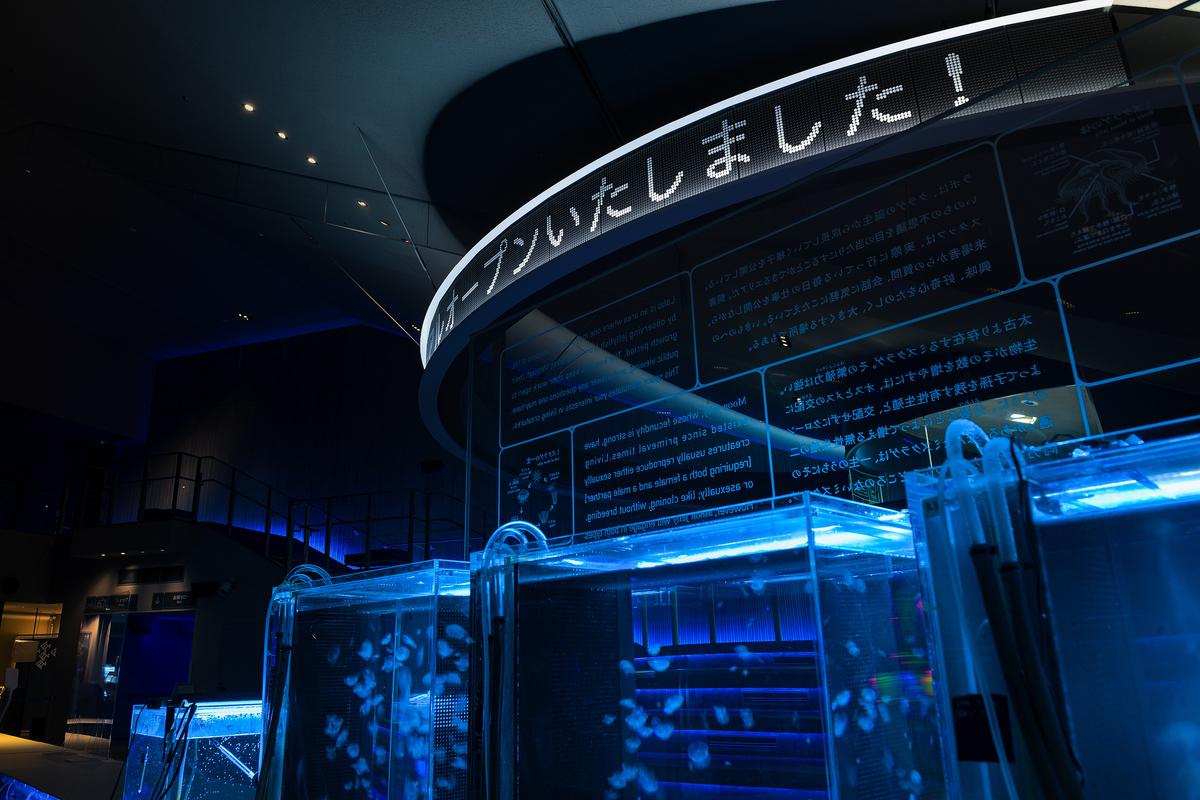 f:id:mojiru:20201204133637j:plain