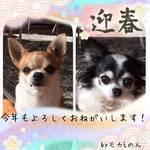 f:id:mokanonmama4:20170101121301j:plain
