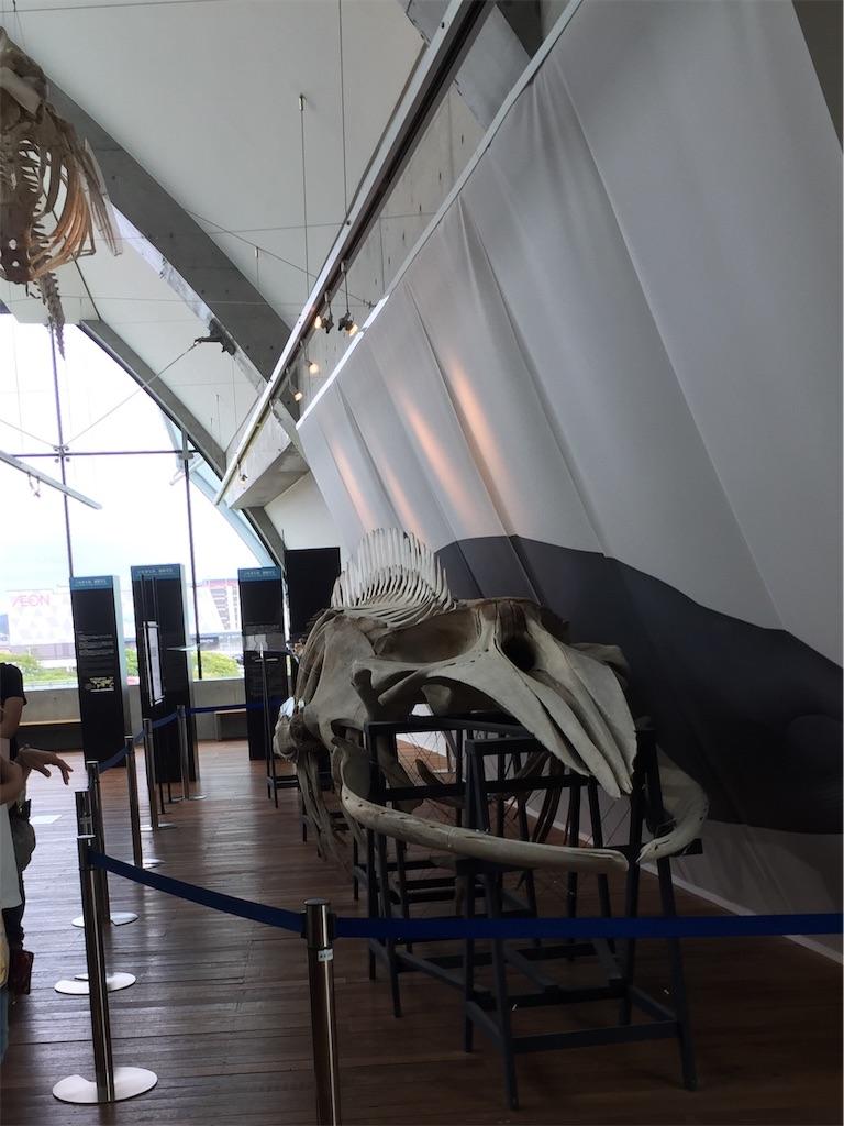 アクアマリンふくしまのクジラの骨の展示の画像