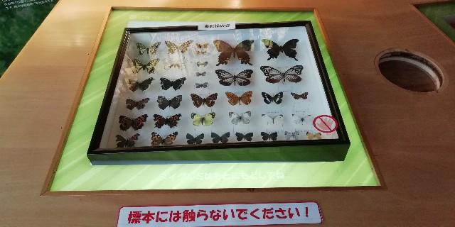 f:id:mokehiro:20191111233137j:image