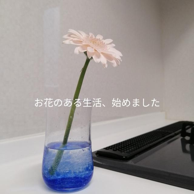 f:id:moko0702mo:20200124215614j:plain