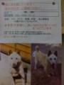 [ポスター][迷い犬] 調布の迷い犬の張り紙