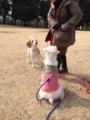 [シュナウザー][犬][野川公園]野川公園で