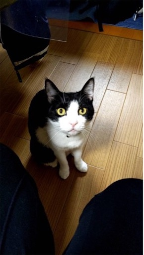 f:id:mokumukumoku:20200515123400j:image