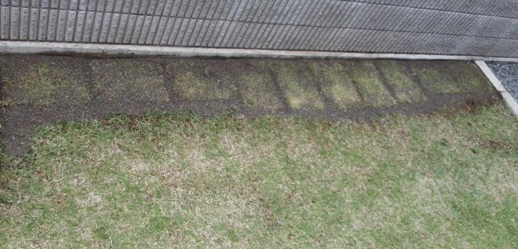 壁際の芝生を植える