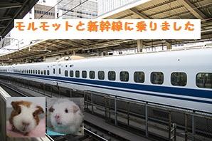 モルモットと新幹線で旅行