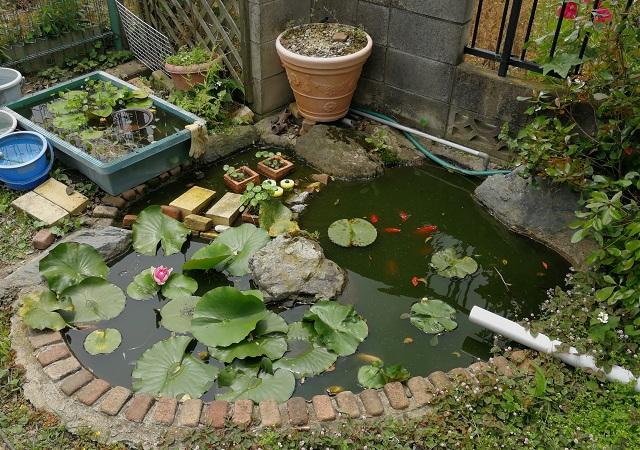 庭の自作池