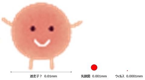 f:id:momijiteruyama:20200806210222j:plain