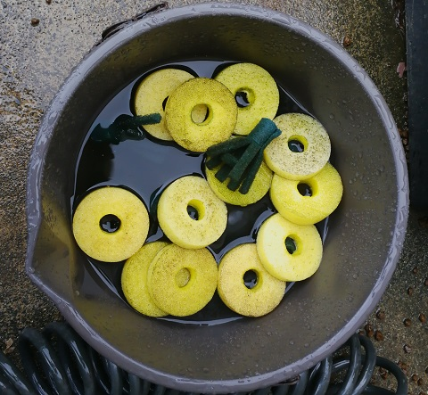 バケツで洗われているタマゴトリーナ