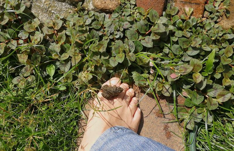 足の上に乗るヌマガエル