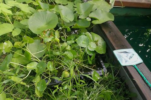 伸び放題の雑草に埋まるNVボックス#13