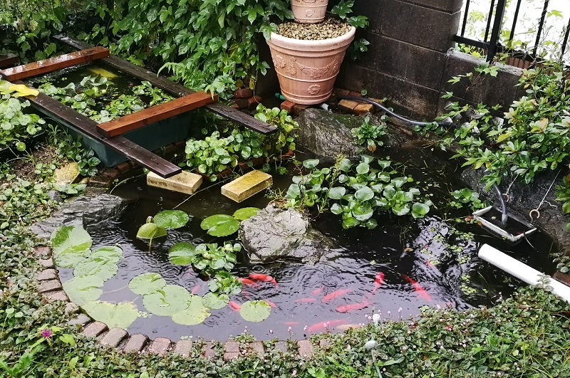 雨模様の自作池