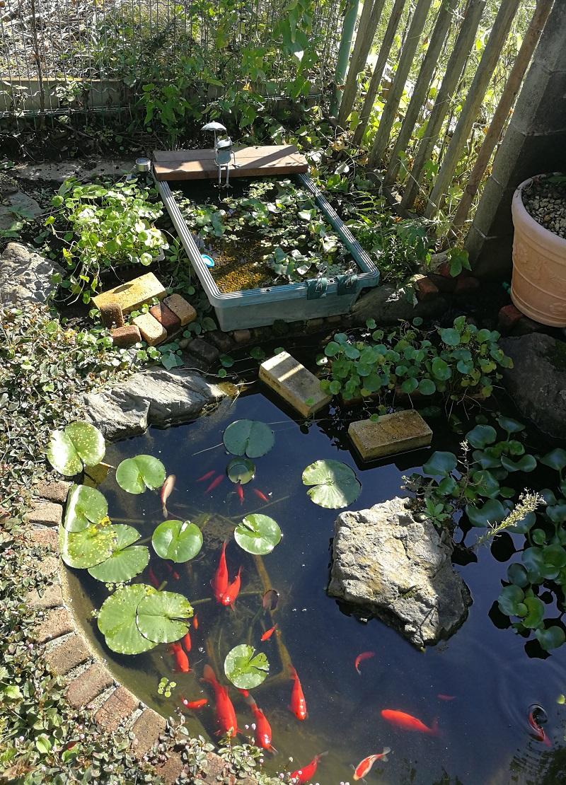 日差しに照らされる池とプラ舟