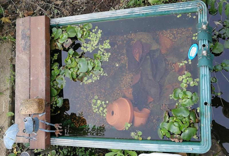 柿の葉が入ったプラ舟