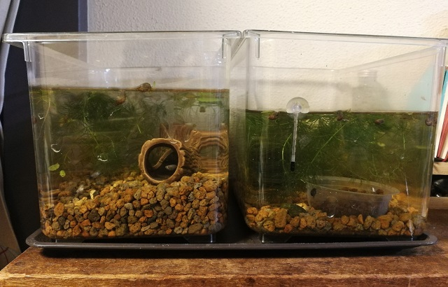 室内に2つ並んだ水槽