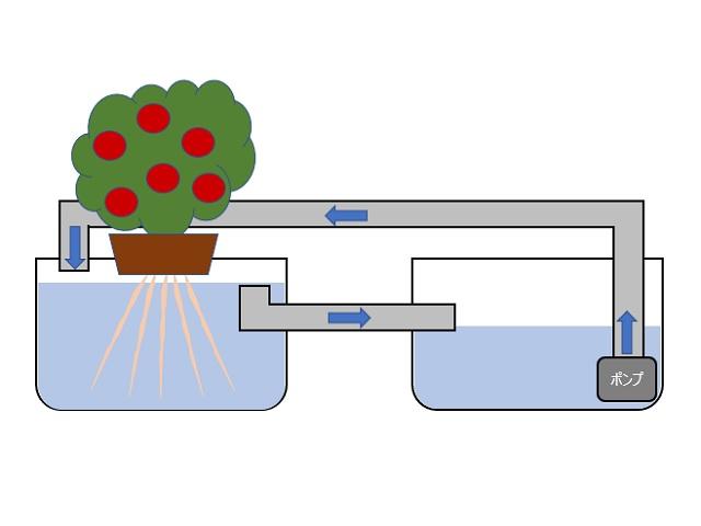 水中ポンプを使った水耕栽培