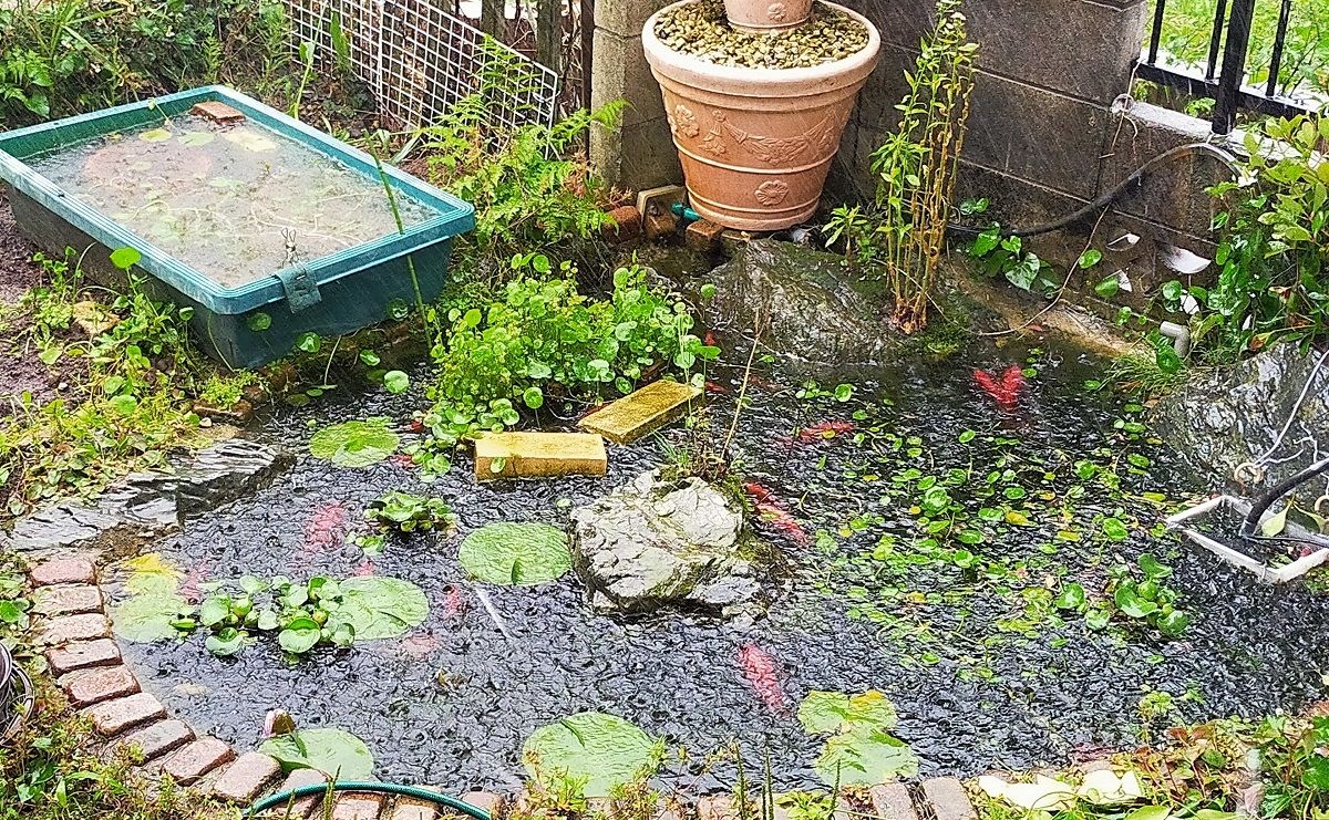 ゲリラ豪雨の池